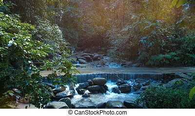 Jungle Stream Crosses a Road at a Jungle Nature Park, with...