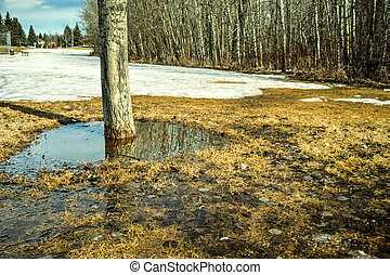 Spring snow melt down in the city park with puddle and tree...