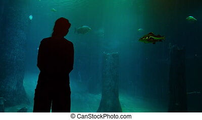 Woman near a huge aquarium. Video FullHD 1080p