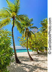 Tropical island with coconut palm trees on sandy beach in Maldives