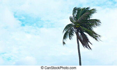 Coconut Palm Swaying in the Wind on a Cloudy Day. FullHD...