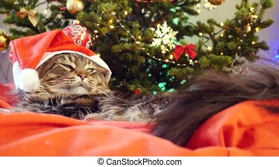 Funny laizy Maine Coon cat as Santa Claus wears christmas cap sits on the pillow at a beautiful new year decorated tree.