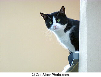 Black and white cat standing next to a wall