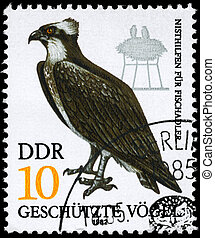 GDR - CIRCA 1982 Fish Hawk - GDR - CIRCA 1982: A Stamp shows...