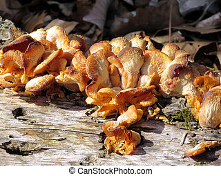 Tree fungus on a coast of the Potomac River near Washington,...