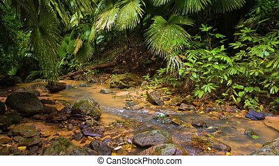 Stream in the wet rainforest. Video 1080p with natural sound