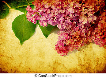 lilac flower - grunge background with space for text or...