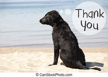Dog At Sandy Beach, Text Thank You - Speech Balloon With...
