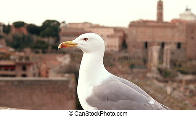 Close-up view of white seagull sitting on roof top and...