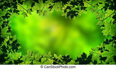 Abstract, Animated Frame of Summer Maple Leaves