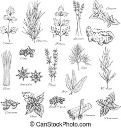 Spices and herbs vector sketch icons - Herbs and spices...