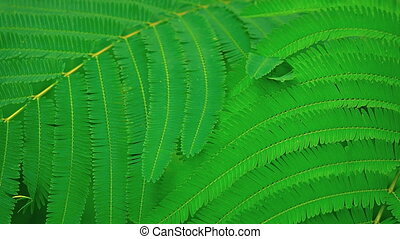 Fern Like Leaves of a Wild Plant in Bali, Indonesia. -...
