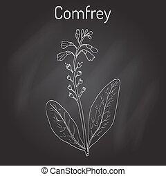 Comfrey Symphytum officinale , or boneset, knitbone,...