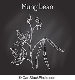 Mung bean Vigna radiata with leaves and pods. Hand drawn...
