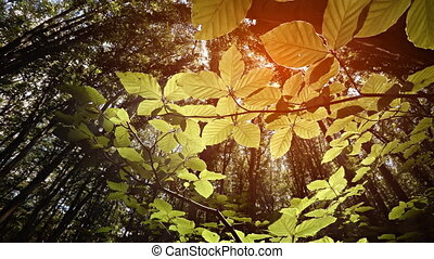 Leaves of Forest Undergrowth Illuminated by Sunshine from...