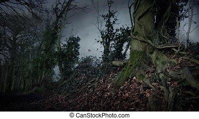 Dramatic Leaves Blowing Around Woodland Path - Woodland path...