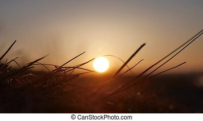 nature sunset. grass swaying in the wind nature on a...