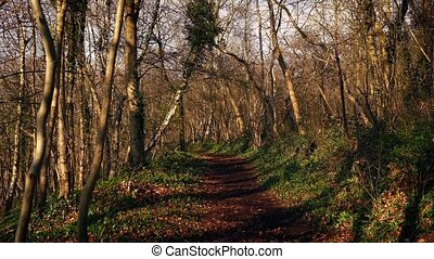 Path Through The Woods At Sunset - Pretty rural scene of...
