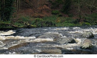 River In Wild Forest - Large river flowing through rugged...