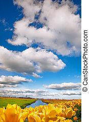 kanał, holandia, tulipany, Żółty, przeciw, krajobraz