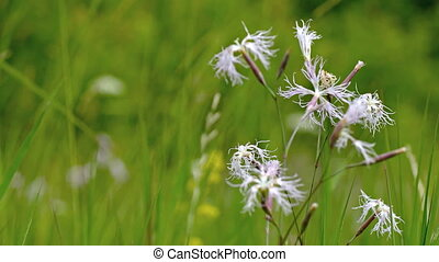 Breeze Stirring Wildflowers in a Meadow. 1080p FullHD...
