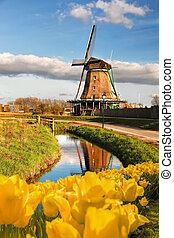 wiatrak, powierzchnia, zaanse, schans, tulipany, tradycyjny,...