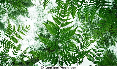 Backlit Fern Leaves against the Sky with Bird Songs. 1080p...