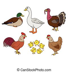 Farm animals set, vector with chicken family and farm items....