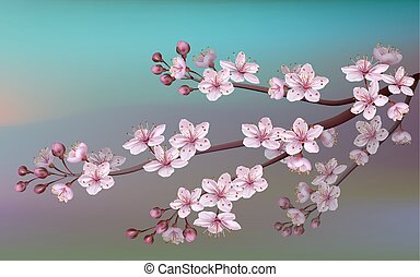 Realistic sakura japan cherry branch with blooming flowers....