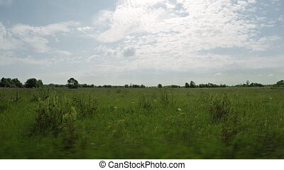 Passing Grassland along a Road at High Speed. - Tall grasses...