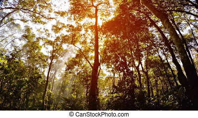 Misty rain forest and rays of sun. Psychedelic tropical...