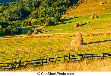 haystacks and a trees on a hillside meadow - haystacks and a...