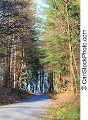 Odenwald forest at spring - Odenwald forest at early spring...