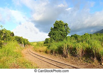 Cane train track - St Kitts - Railroad tracks run through a...