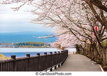 flor, Cereza, lago, fiesta, Durante, Trayectoria, hanami,...