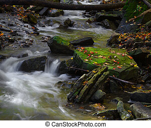 Babbling Brook - Moss covered rock catching sunlight in...