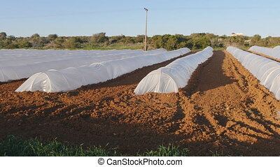 Polythene tunnel as a plastic greenhouse in an allotment...