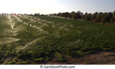 sprinklers operate in a field - Shot of sprinklers operate...