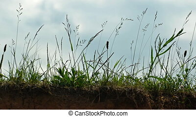 Wind Blowing over Grass on a Bluff. - Steady wind blows over...