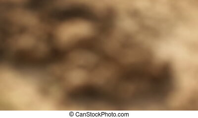 Camera Slowly Focuses on Clods of Clayey Soi. Video 1080p -...