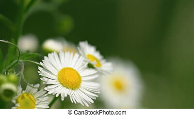 Extreme closeup of White and Yellow Flowers in a Breeze....