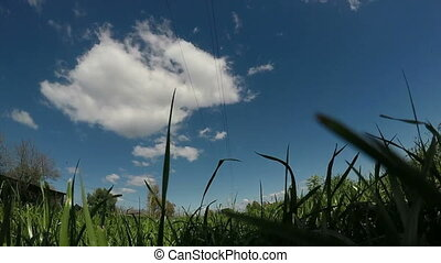 Pov At Grass Level - Camera point of view at the level of...