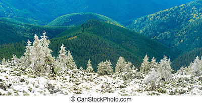 Panorama of pine trees in snow mountains over sunny hills