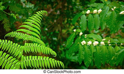 Fern and Other Wild Plants in Balinese Wilderness Area -...