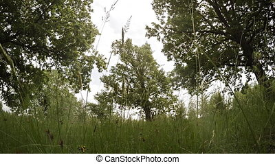 Tall Trees in a Meadow with a Breeze and Sound - Low angle...