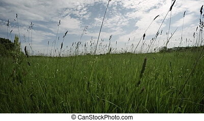 Brisk Walk through a Broad Meadow on a Cloudy Day - Tall...
