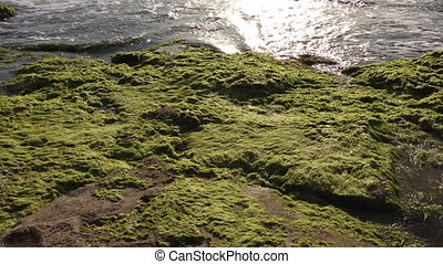 Sea landscape with stones covered with algae - Shot of Sea...