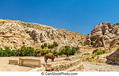 Bedouin hourses rest in the ancient city of Petra