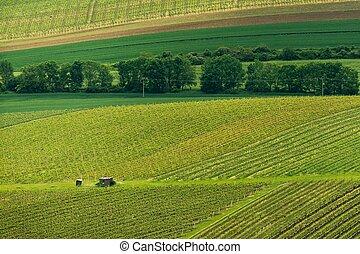 Vineyards, spring, Moravia - Spring vineyards in the...