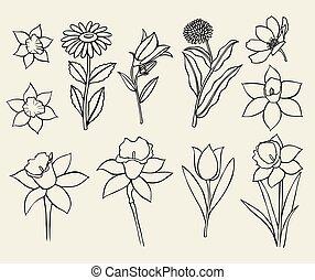 Calendula flower isolated - Set of flower isolated on white...